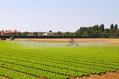 Irrigation field Stock Images