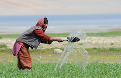 Irrigation of the field Stock Images