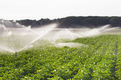 Irrigation in Field Royalty Free Stock Images