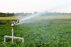 Irrigation in the field Stock Images