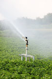Irrigation in the field Royalty Free Stock Images