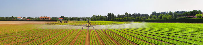 Irrigation field panorama Royalty Free Stock Image