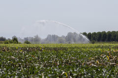 Irrigation fields Stock Photos