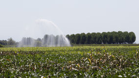 Irrigation fields Stock Photo