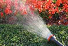 Irrigation of the flowers. In sunny day Royalty Free Stock Photo