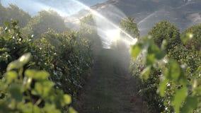 Irrigation 4K UHD d'Okanagan