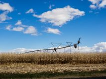 Irrigation lines in corn field. An irrigation pivot line in a corn field ready for an autumn harvest in western Idaho Stock Image