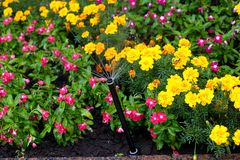 Irrigation Of Flower Beds Stock Photo