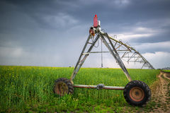 Irrigation in oilseed rape field on cloudy day. Sprinkler irrigation system in oilseed rape field on cloudy day Royalty Free Stock Images