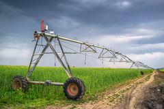 Irrigation in oilseed rape field on cloudy day. Sprinkler irrigation system in oilseed rape field on cloudy day Royalty Free Stock Photo