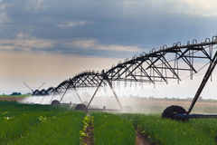 Irrigation of onion field Stock Photography