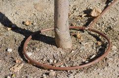 Irrigation par égouttement photographie stock