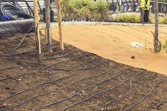 Irrigation par égouttement sous la surface pour des usines Image libre de droits