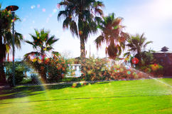 Irrigation park with palm trees Royalty Free Stock Image