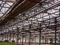 Irrigation pipe line. Irrigation pipe line for seedling in greenhouse Royalty Free Stock Photography