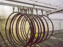 Irrigation pipe line for seedling. Irrigation pipe line for seedling in greenhouse Royalty Free Stock Photography