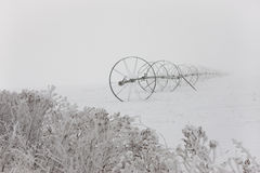Irrigation pipe in winter fog. Stock Photos