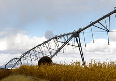 Irrigation lines in corn field. An irrigation pivot line in a corn field ready for an autumn harvest in western Idaho Royalty Free Stock Photography