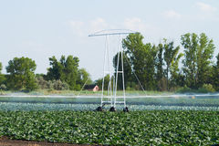 Irrigation pivot watering Stock Photography