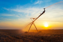 Irrigation pivot on wheat field at summer sunrise Royalty Free Stock Photography
