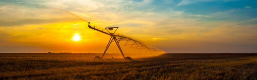 Irrigation pivot on the wheat field Stock Image