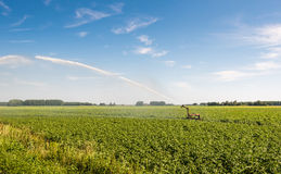 Irrigation of a potato field in summer heat Royalty Free Stock Image