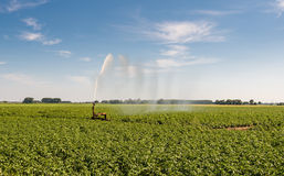 Irrigation of a potato field in summer heat Royalty Free Stock Photo