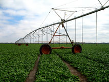 Irrigation in spinach (Spinacia oleracea). Large-scale irrigation in Texas spinach (Spinacia oleracea) field Royalty Free Stock Photos