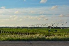 Irrigation Sprayer 4 stock photos