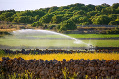 Irrigation spring on cereal fields in Menorca balearic Stock Photography