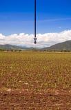 Irrigation Sprinkler Royalty Free Stock Images