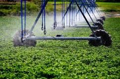 Irrigation Sprinkler System for Agricultural Farm Farming Crops Stock Image