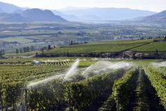 Irrigation Sprinkler Vineyard Winery Stock Photo