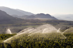 Irrigation Sprinkler Vineyard Winery Stock Photography