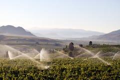 Irrigation Sprinkler Vineyard Winery Stock Photos