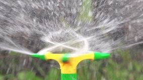 Irrigation Sprinkler Watering Vegetable Garden stock footage