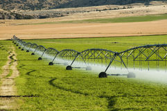 Irrigation system. A center pivot irrigation system working in an alfalfa field Stock Photography