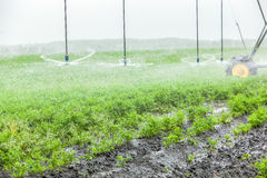 Irrigation system for a carrot on an industrial farm Stock Image
