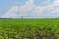 Irrigation system on a corn field Royalty Free Stock Image