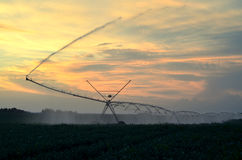Irrigation system on the field of green beans at sunset Royalty Free Stock Image