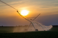 Irrigation system on field of green beans at sunset in summer Stock Photos