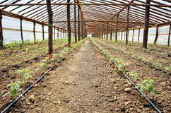 Irrigation system in greenhouse Royalty Free Stock Images