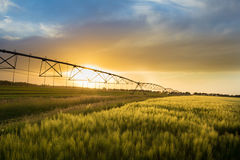Irrigation system n wheat field Royalty Free Stock Photos