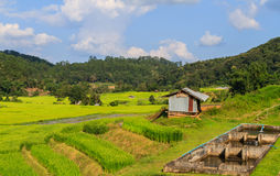 Irrigation system for paddy and fishery Stock Images