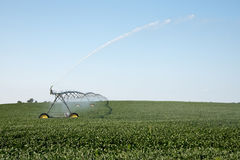 Irrigation system. Soybeans are watered by an irrigation system Stock Image