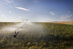 Irrigation system on sunflower field Royalty Free Stock Photography