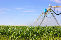 Irrigation system watering green corn field Royalty Free Stock Image