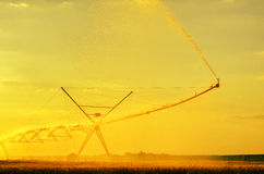 Irrigation system on the wheat field Royalty Free Stock Image
