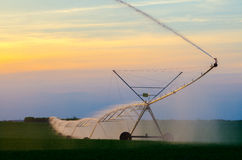 Irrigation system on the wheat field at sunset Royalty Free Stock Photo
