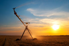 Irrigation system on the wheat field at sunset Royalty Free Stock Images